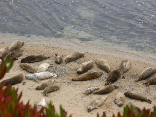 Seal Cove Inn: The Elephant Seals