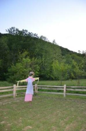 Snug Hollow Farm Bed & Breakfast: Garden