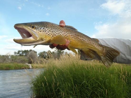 Melrose, MT: Big Brownie