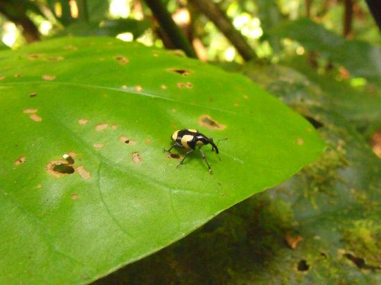 Bed Bugs Costa Rica Hotels