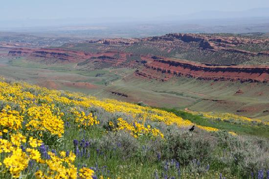 Lander, WY: Red Canyon