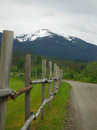 Glacier Bay's Bear Track Inn: Road leading to the Inn