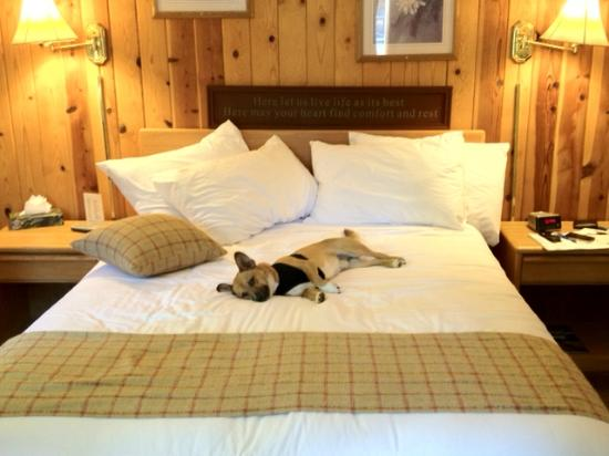 Tahoe Vista, Kaliforniya: Oscar enjoying the dog-friendly room!