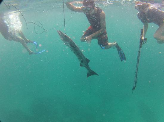 Spearfishing Costa Maya: Barracuda #1