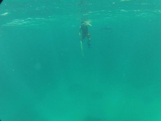 Spearfishing Costa Maya!