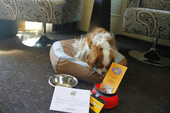 The Oxford Hotel: Decor-matching Doggie bed and treats
