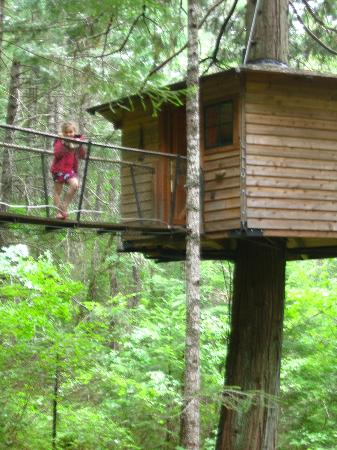 Cave Junction, Oregn: Lily Pad treehouse