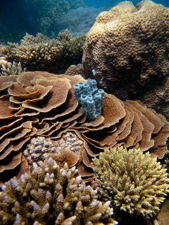 Chumbe Island Coral Park: Coral Reef snorkeling