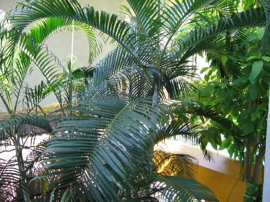 Muang Luang Hotel: love those palms