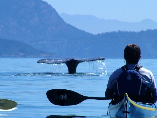 ‪Anacortes Kayak Tours - Day Tours‬