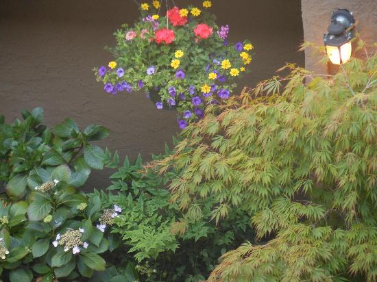 Quality Inn Downtown Inner Harbour: Flowers in the courtyard