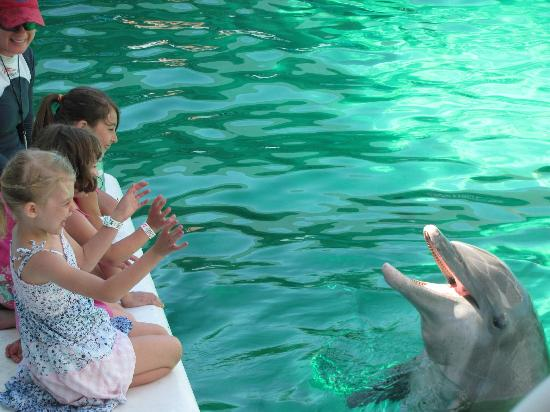 Dolphin Encounter Picture Of Clearwater Marine Aquarium