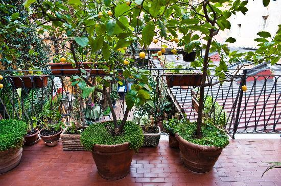 Navona Gallery &amp; Garden Suites: Lemon trees in Michalangelo