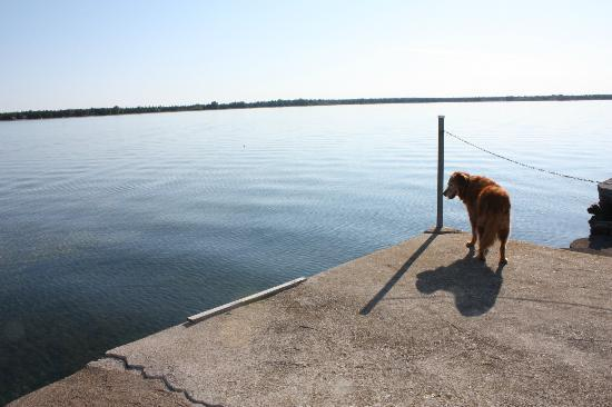 Beachfront Inn: Lucy pondering the world at the end of the concrete dock