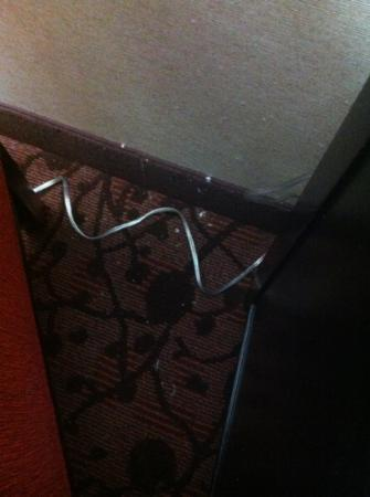 Doubletree Hotel Dulles Airport-Sterling: Gross!