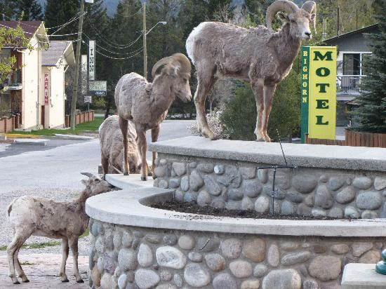 Photo of Big Horn Motel Radium Hot Springs