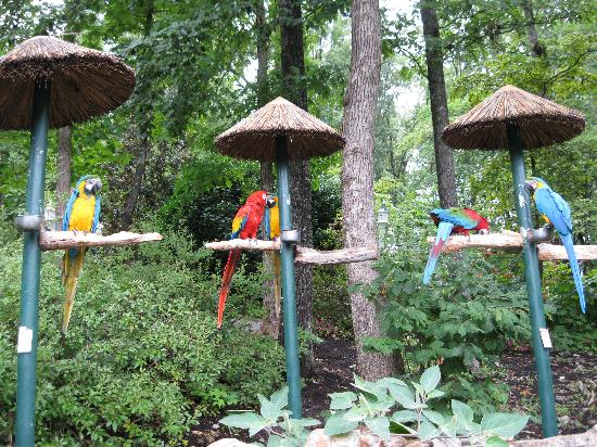 parrot mountain picture of parrot mountain gardens pigeon forge tripadvisor