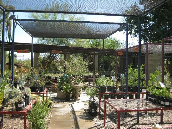 Shadow Mountain Resort and Club: Palo Verde Garden Center at the Living Desert!