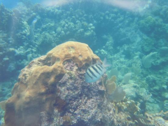 West Bay B & B: Coral reef full of beautiful fish and other creatures