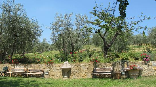 A Casa di Olivo: The beautiful flowers and mini garden on the farm