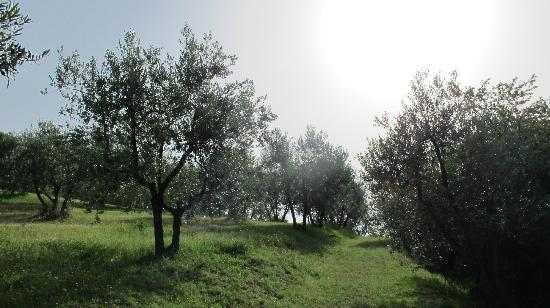 A Casa di Olivo: The beautiful and peaceful olive farm just behind the house with great views over Florence