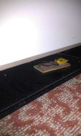 Holiday Inn Baltimore-Inner Harbor: Lovely mousetrap. Didn't work. A mouse was still in the room.