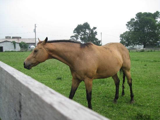 Orchard House Bed and Breakfast: A Neighbor Horse Just Next Door