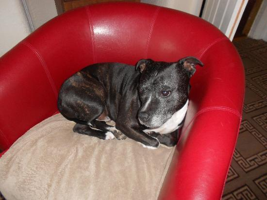 The White Lodge: Gorgeous George the dog in his chair!