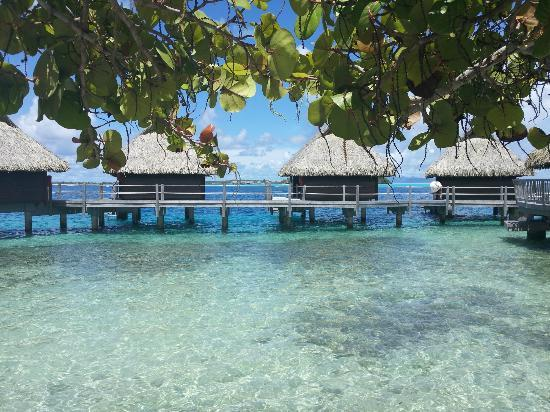 Hotel Maitai Bora Bora: View from our room