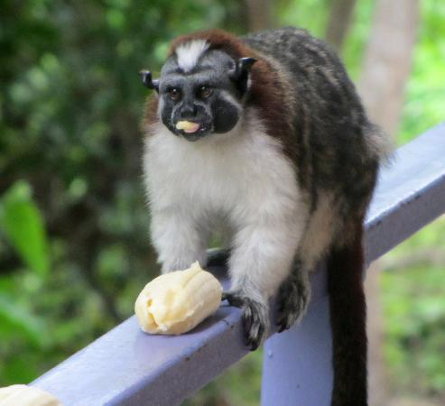 La Estancia: Monkey on the balcony