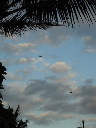 The Shore Villa: Windy time of the year- lots of kites