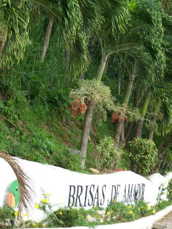Amador Ocean View Hotel & Suites: jungle near pool area