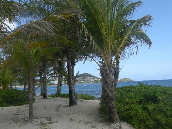 The Palms at Pelican Cove: hotel grounds
