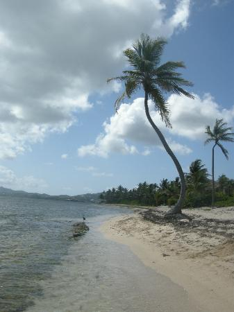 The Palms at Pelican Cove: the beach