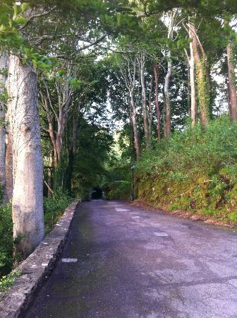 Hotel Ard na Sidhe: Driveway from the hotel looking to the road