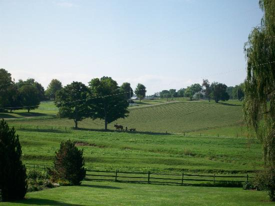 Fields of Home Lodge and Cabins: view from porch
