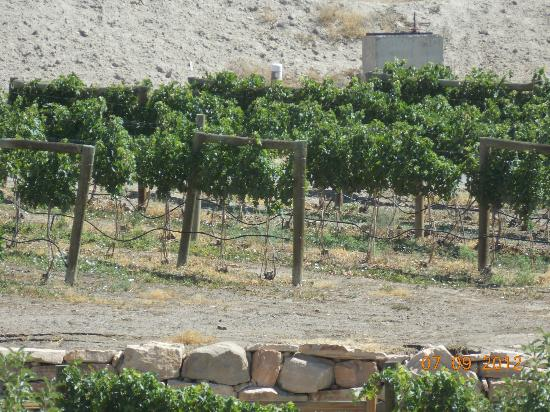 Wine Country Inn: One of the many vineyards