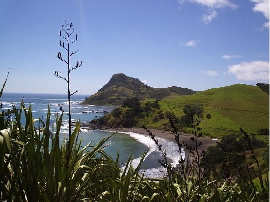 Coromandel Discovery Day Tours