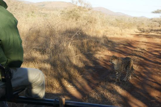 Thanda Private Game Reserve: cheeta