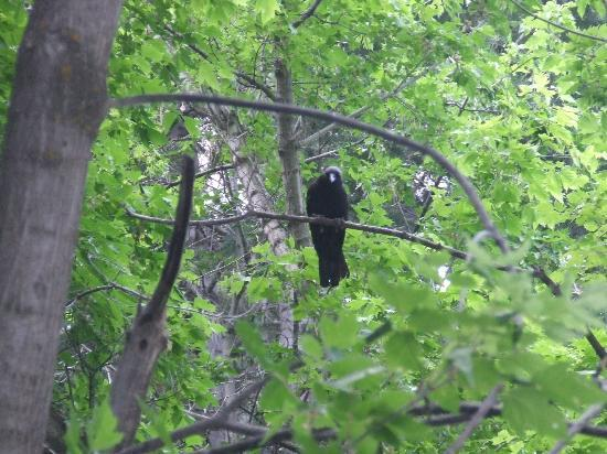 4J+1+1 RV Park: Visitor in the trees above our pop up