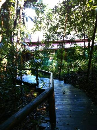 Secrets on the Lake: Looking down to cabin from bush spa