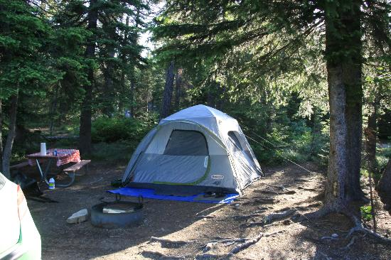 Two Medicine Campground: camp loop c