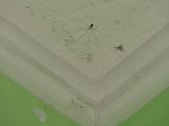 Days Inn Bar Harbor/Frenchman's Bay: Spiders in room