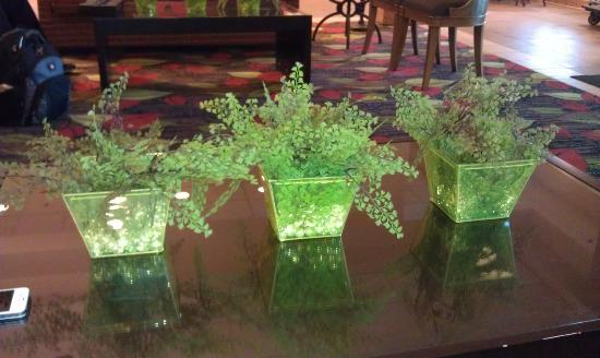 Holiday Inn Chicago-Tinley Park-Convention Center: decorative plants in lobby