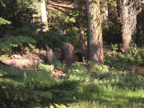 Dorst Campground: Bear in the meadow
