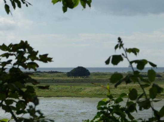 Seaview: Bull Island view with zoom lens by peeking through foliage-covered neighborhood fence