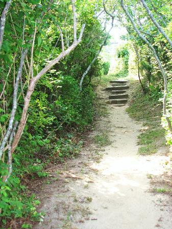 "Burcliffe ""By The Sea"": The secluded path to the private beach was even beautifully maintained."