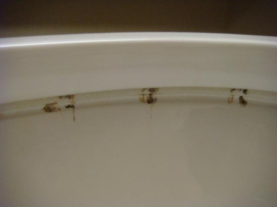 Holiday Inn Express Hotel & Suites Seaside - Convention Center: Dirty Toilet In Our Room