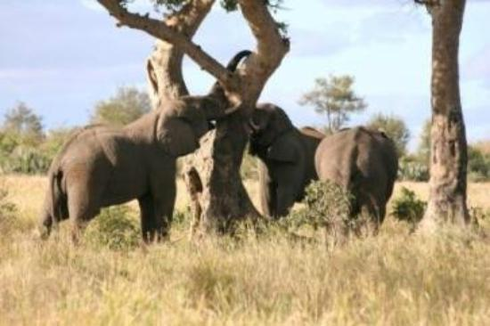 Ama-Zing African Safaris - Day Tours