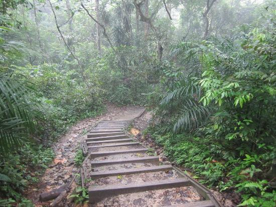 Photos of Bukit Timah Nature Reserve, Singapore